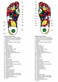 reflexoterapia, zonele reflexogene si sistemul nervos